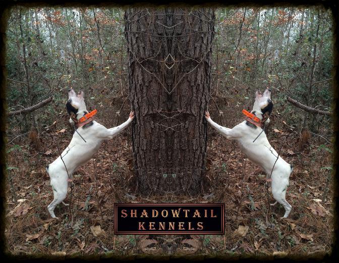 Shadowtail Kennels